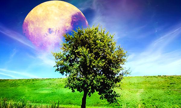 Лунный посевной календарь 2020 для садовода и огородника и цветовода