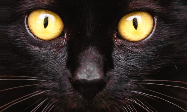 почему нельзя смотреть кошке в глаза фото