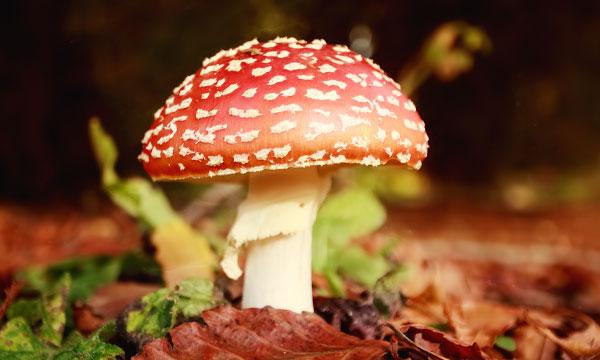 грибы к чему снятся