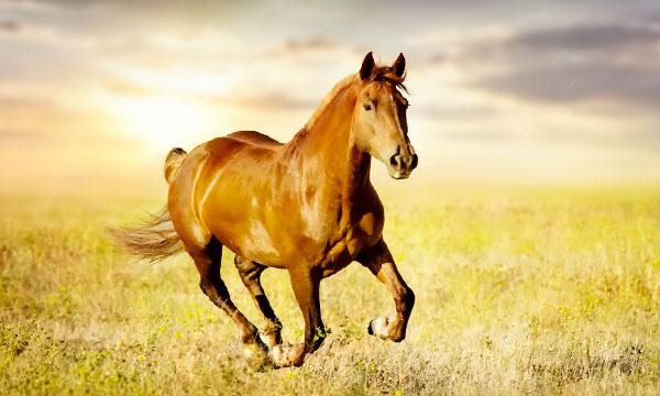 лошадь к чему снится