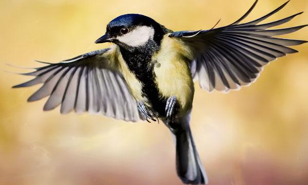 К чему снятся птицы летящие в небе