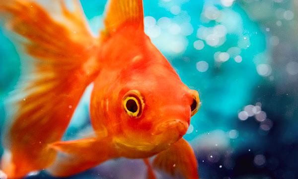 К чему во сне рыба снится к беременности